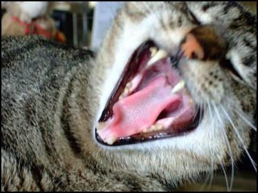Katzen 023